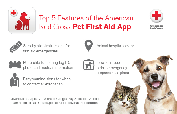 Pet First Aid App Infographic